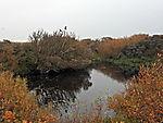 freish water pond on island Helgoland Dune