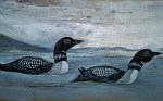 Great northern diver artists painting ( gavia immer )