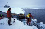diver in the arctic