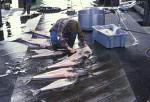 Angler schlachtet Heilbutt