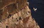 Helgoland Vogelfelsen