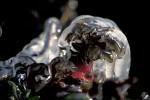 ice on plant
