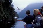Touristen im Fjordland