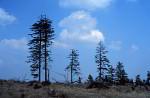 Waldsterben im Oberharz 1991