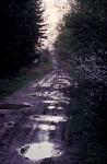 Pfützen auf Waldweg
