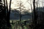 Gatter im Wald