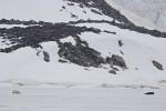 hunting polar bear in Raudfjorden ( Thalarctos maritimus )