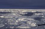 antarktisches Packeis