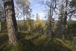 Taiga anfinnisch-russischer Grenze