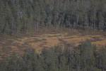 Taiga an finnisch-russischer Grenze