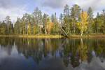 finnische Taiga am See