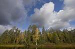 finnische Taiga