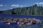 Holzflöße in Finnland