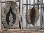 furs from harp seal and ringed seal ( phoca groenlandica, phoca hispida )
