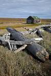 Herschel Island Hüüte und Treibholz