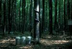 Umweltforschung im Wald