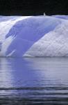 Möwe auf blauem Eisberg