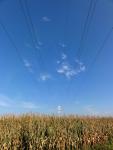 Hochspannungsleitung über Maisfeld