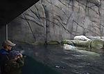 Kinder und Eisbären im Zoo, ursus maritimus