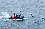 tourists at bird cliff Alkefjellet