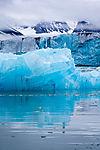 blauer Eisberg mit Möwe