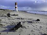Naturfotografen auf Helgoland