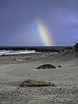 Sturm am Robbenstrand