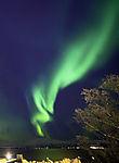 Nordlichtschlange