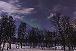 Nordlicht über Bäumern