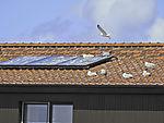 Seagulls smutch solar heating