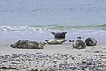 Robbenstrand auf Helgoland