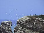 Vogelfelsen von Helgoland