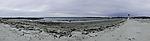 Kegelrobben am Strand der Helgoländer Düne, Halichoerus grypus