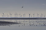 waterfowl and windmills