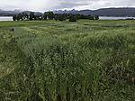 grain field in the arctic