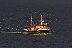 fishing boat and Gulls