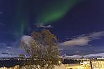 Nordlicht über Birke, Betula sp.
