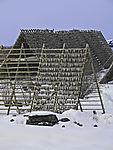 dried cod in Svolvär