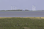 wind power and Geese at Dollart