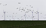 Geese and wind power