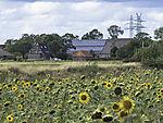 Solaranlage und Sonnenblumen, Helianthus annuus