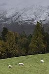 new snow near Oppdal