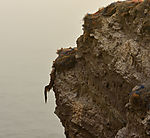 verlassenes Vogelkliff