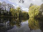 pond in late autumn in Hamburg