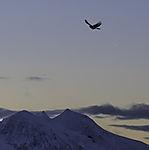 planet Venus and Magpie over mount Bentsjordtinden