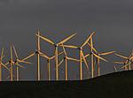 Windpark im Abendlicht
