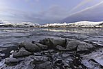ice in fjord in northern Norway