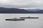 Lachskäfige in Mittelnorwegen