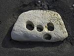 holes from Piddocks in limestone