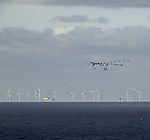 windpark and birds north of island Helgoland